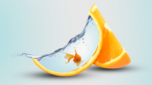 Fish swimming in an Orange Close Up